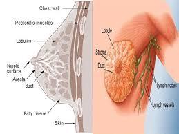 Göğüs Kanseri Başlangıcı Evresinde Neler Yapılmalıdır?