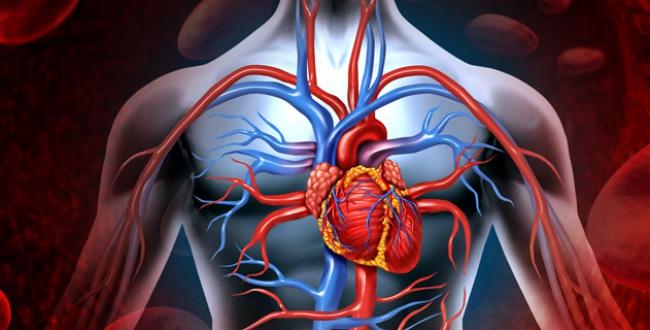 kalp sağlığı, kalp çalışma mantığı, kalp nasıl çalışır